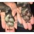 Kép 2/4 - Sheila Puha Tappancs Mancsápoló - Körömvirág kivonattal