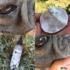 Kép 2/5 - Sheila Fül és bőrredő tisztító folyadék - Mandulaolajjal és B5-provitaminnal
